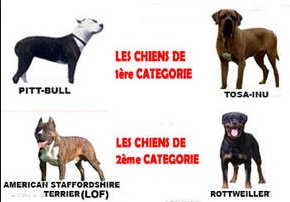 Detention-de-chien